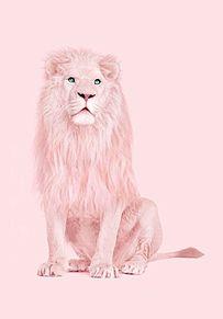 パステル  素材の画像(ピンク/pink/シャボン玉/花に関連した画像)