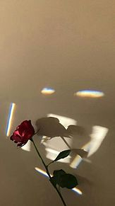 バラ プリ画像