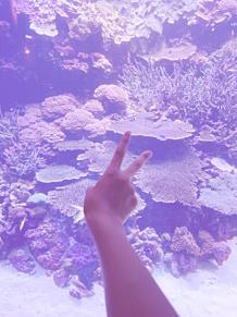 水族館の画像(水族館に関連した画像)