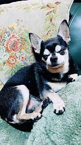 うちの犬 プリ画像