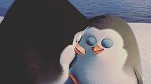 ザ・ペンギンズの画像(プリ画像)