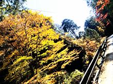 秋の画像(秋 背景に関連した画像)