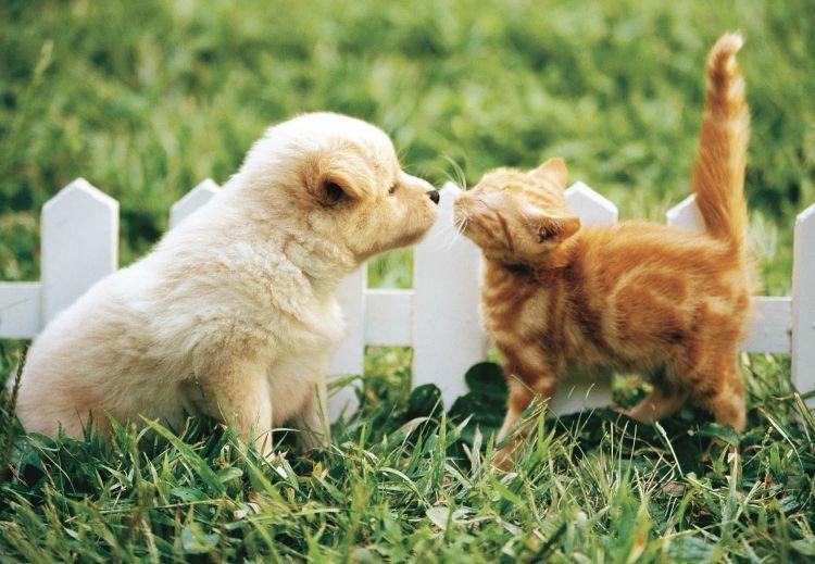 子猫とキスするかわいい子犬