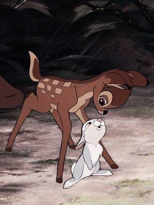 とんすけを覗き込むバンビ