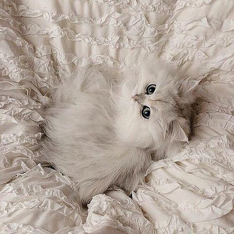 ヴィンテージ アンティーク 雰囲気 フレンチガーリーの画像(プリ画像)