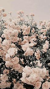 ヴィンテージ アンティーク 雰囲気 フレンチガーリー プリ画像