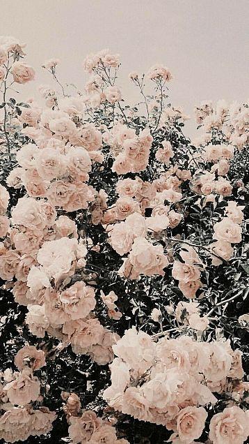 ヴィンテージ アンティーク 雰囲気 フレンチガーリーの画像 プリ画像