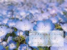 青いベンチ 歌詞画の画像(失恋に関連した画像)