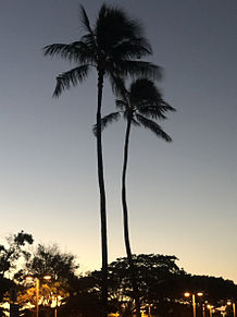 Hawaiiの画像(ハワイに関連した画像)