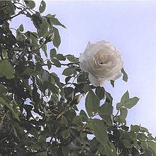 🎲の画像(オシャレ 花に関連した画像)