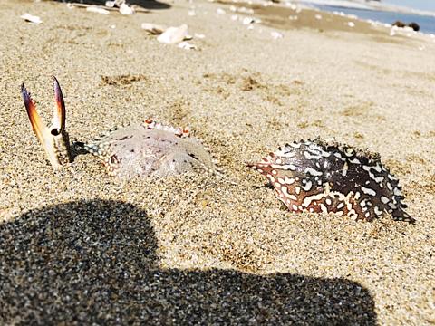 保存♡海🦀の画像 プリ画像