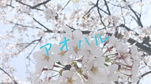 保存♡桜🌸 プリ画像