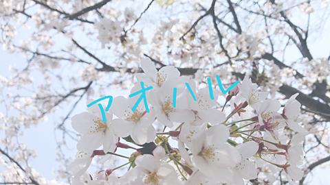 保存♡桜🌸の画像(プリ画像)