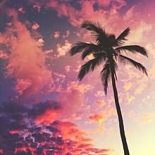 おしゃれ ハワイ 壁紙 海外の画像9点 完全無料画像検索のプリ画像 Bygmo
