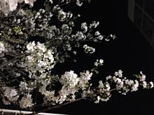 コンビニと酔桜。 プリ画像