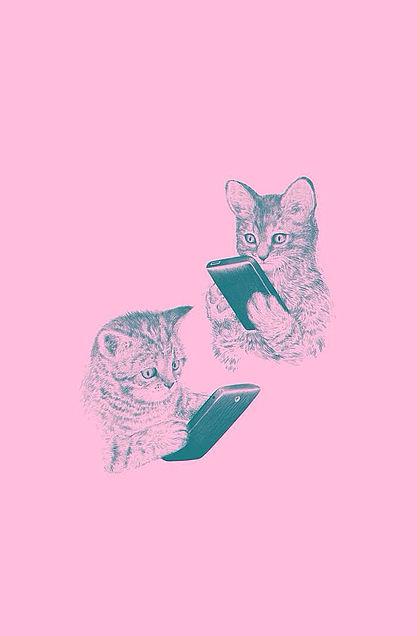 猫の壁紙の画像 プリ画像