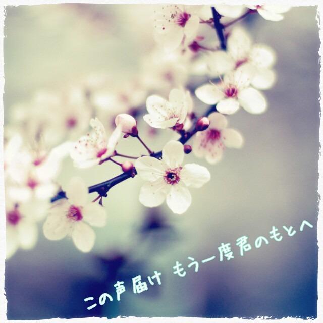 春風の画像 プリ画像 春風 [21640528] | 完全無料画像検索のプリ画像! prican