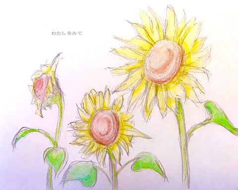 向日葵の画像 プリ画像