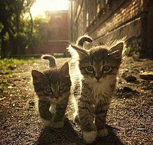 子猫の兄弟の旅の画像(プリ画像)