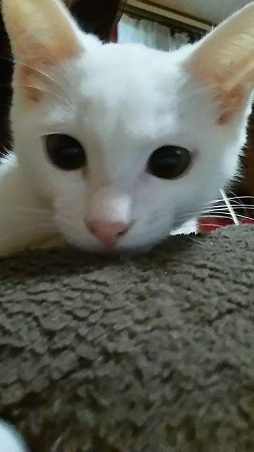 可愛い猫(ω´∀`ω)ニャン♪の画像(プリ画像)