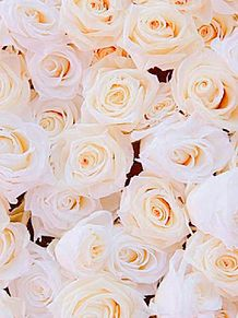 白薔薇 -深い尊敬_私は貴方にふさわしい-の画像(深いに関連した画像)