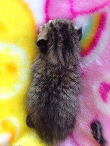 子猫の背中の画像(プリ画像)