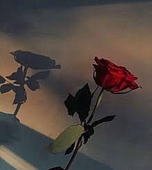 薔薇画像   おしゃれ💃の画像(プリ画像)
