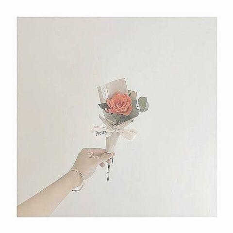 おしゃれ    薔薇の画像(プリ画像)