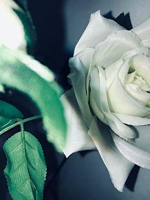 花の画像(薔薇に関連した画像)