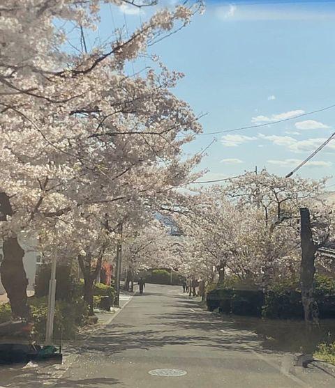 桜並木と空の画像(プリ画像)