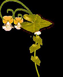 お花のランプの画像(プリ画像)