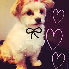 美顔女子犬の画像(プリ画像)