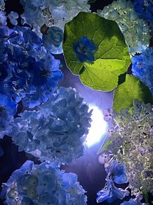 花の画像(#映えに関連した画像)