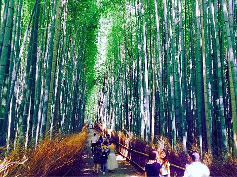 京都の画像(プリ画像)