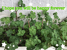 I hope you will be happy foreverの画像(クローバー 四つ葉に関連した画像)