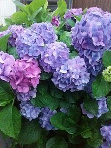 お花は好きですか?の画像(お花に関連した画像)