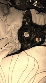 黒猫のベルの画像(黒猫に関連した画像)