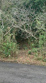 秘密の入口の画像(景色に関連した画像)