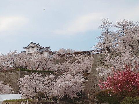 桜と城の画像(プリ画像)