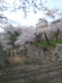 桜と城 あえてのぼかし プリ画像