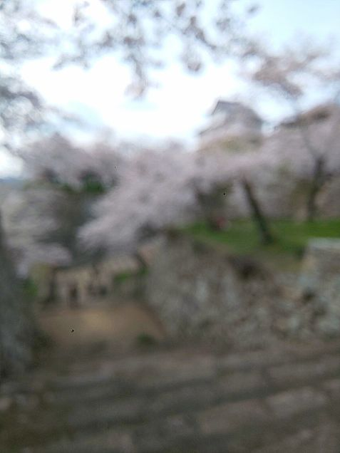 桜と城 あえてのぼかしの画像(プリ画像)