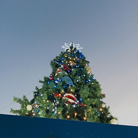 クリスマス   ツリーの画像(プリ画像)
