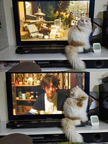 我が家の愛猫の画像(CATに関連した画像)