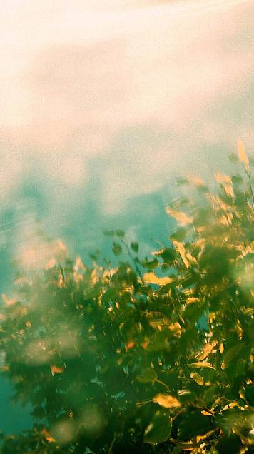 植物の画像(プリ画像)