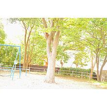 もんちゃんです〜の画像(もんちゃんに関連した画像)