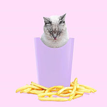 catの画像(プリ画像)