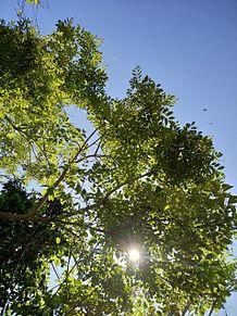 自然 葉っぱ 太陽 庭の画像(自然に関連した画像)