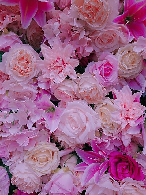 ピンク  花の画像(プリ画像)