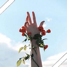 薔薇の画像(薔薇に関連した画像)