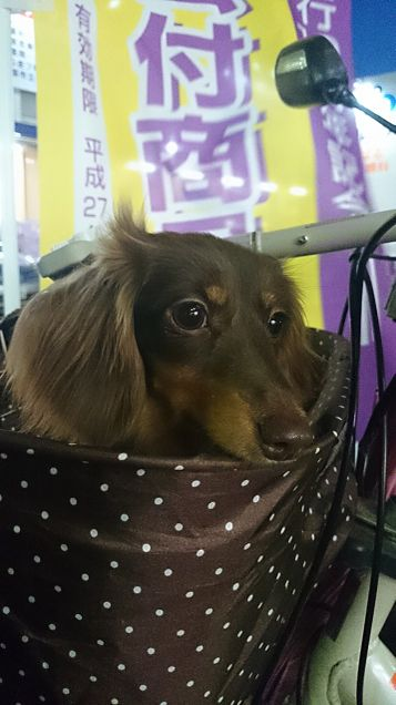 my  dogの画像(プリ画像)